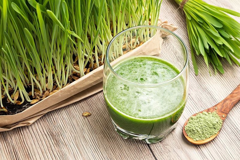 green barley plus cena apteka